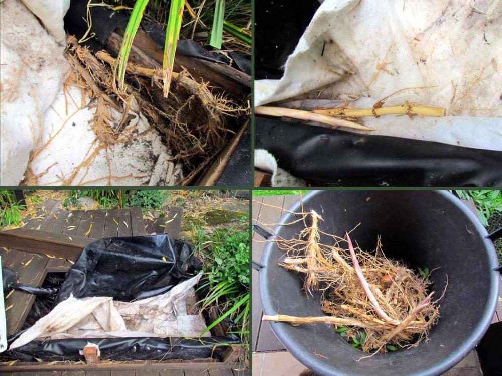 3Invasion bambous bain d'oiseaux